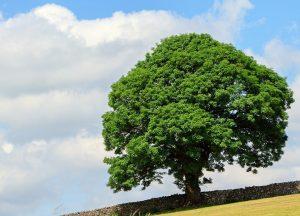 tree-1768982_960_720